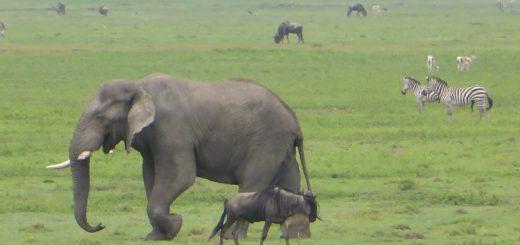 Ngorongoro Crater - Safari in Africa Day 3
