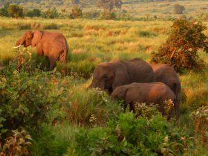 Sunrising with elephants.