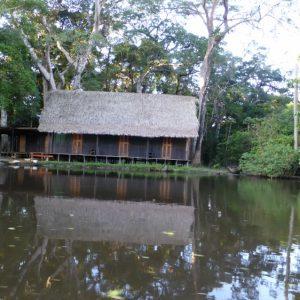 The Pampas: Amazon