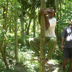 Ken, climbing trees like a pro.