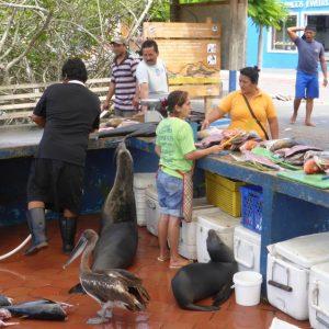 Isla Santa Cruz to Isla San Cristóbal: Consistent Animal Entertainment