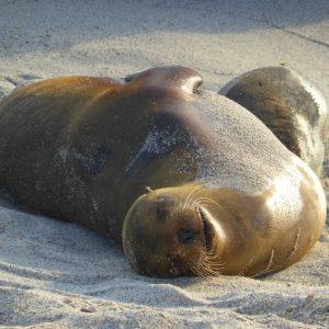 Isla San Cristóbal: How Galapagos were Created