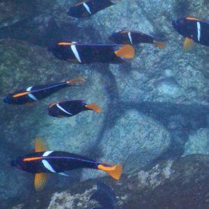 Isla San Cristóbal, Galapagos – Swimming with Sharks