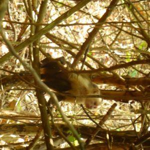 Monkey!  In Parque Nacional Natural Tayrona.