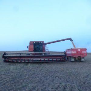 Case IH 1680 harvester.