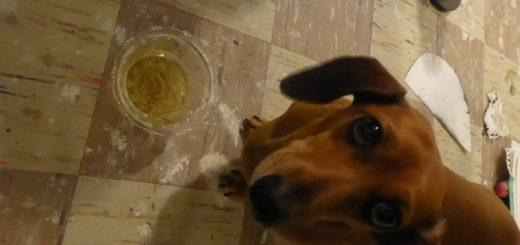 Regina – Beer Dog