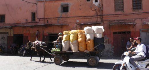 Moroccan female meltdown