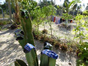 Michamvi Zanzibar: Beans vs Mashed