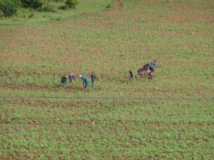 Yayeda Chini Hadza Tribe: Hunter Gatherer Money Greed