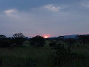 Serengeti sunset.