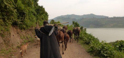 Rwanda to Uganda: From Gorillas to Potato Trucks