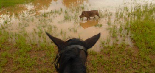 Victoria Falls: Zambezi Horse Trails