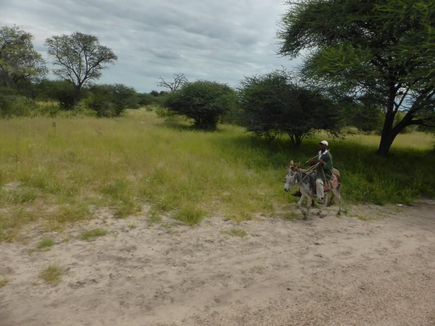 Along the road in Botswana.