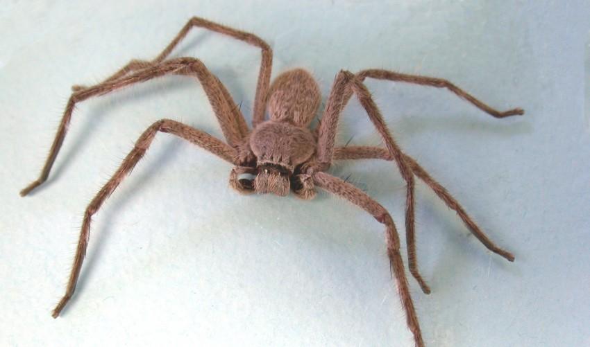 Death by spider