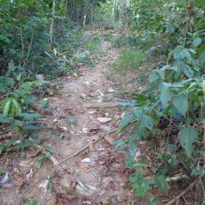 Ayahuasca and Mental Inception - Rio de Janeiro Forest