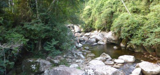 Rio de Janeiro Forest: After Ayahuasca