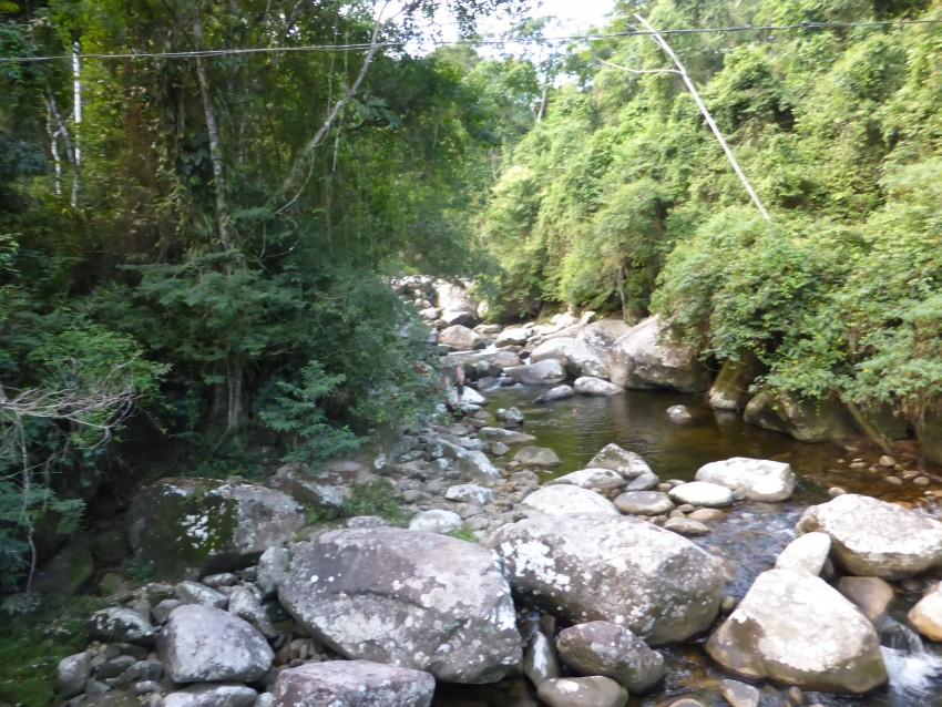 Ayahuasca/Santo Daime Experience
