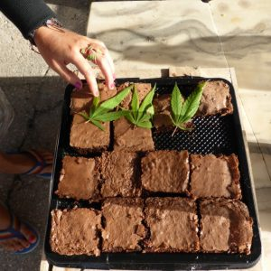 Cabo Polonio: Weed Brownies