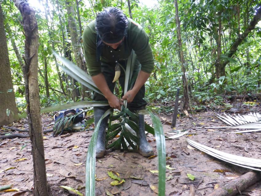 Selva Jungle. Amazon Rainforest Survival Adventure.  Rurrenabaque, Bolivia.
