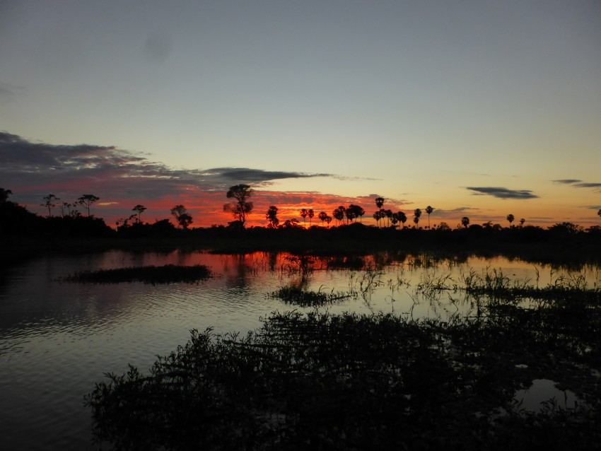 The Pampas. Amazon.  Bolivia.