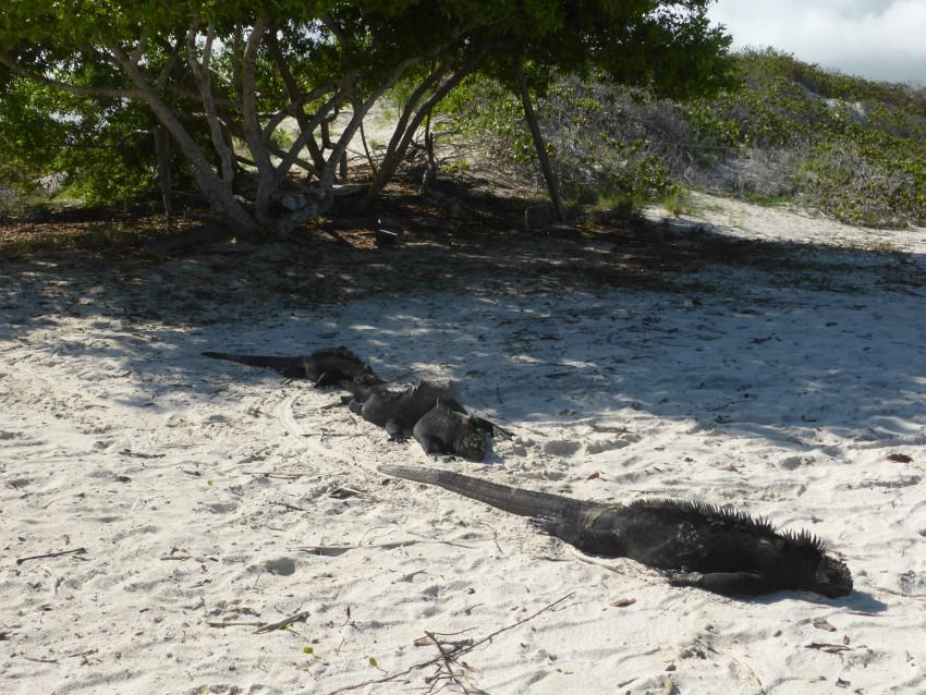 Isla Santa Cruz, Galápagos Islands, Ecuador