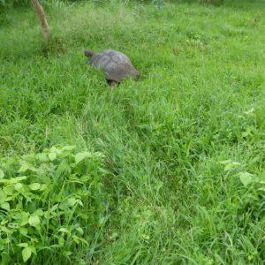 Puerto Ayora, Galapagos: The Lion Thief