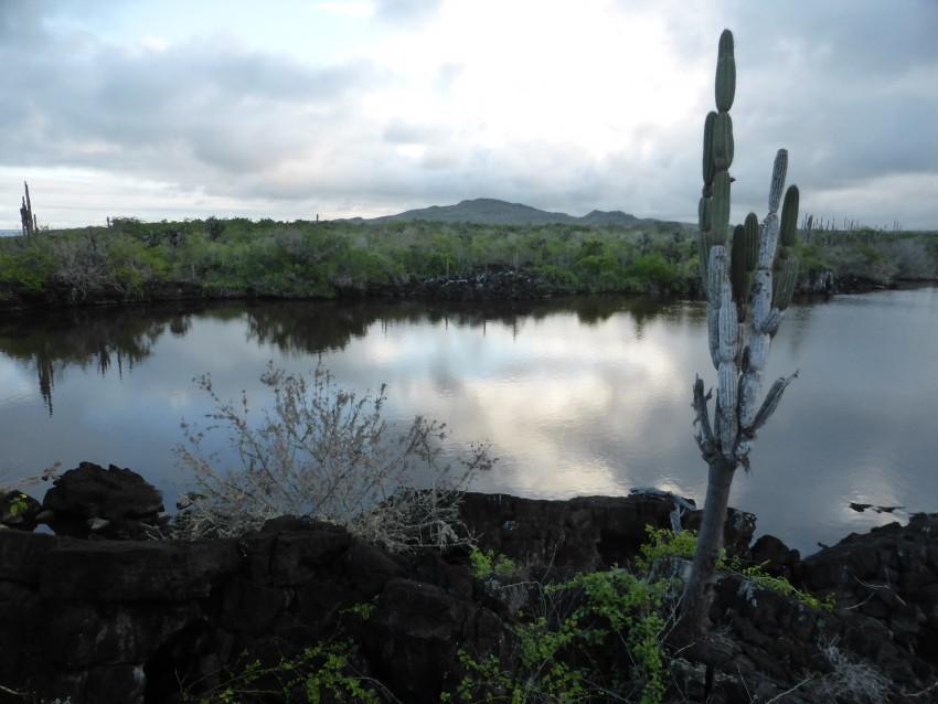 Isla Isabela, Galápagos Islands, Ecuador