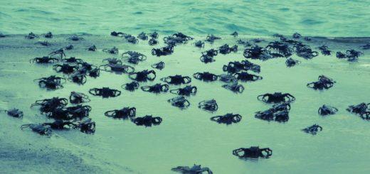 Isla Santa Cruz to Isla Floreana – Fantasyland?