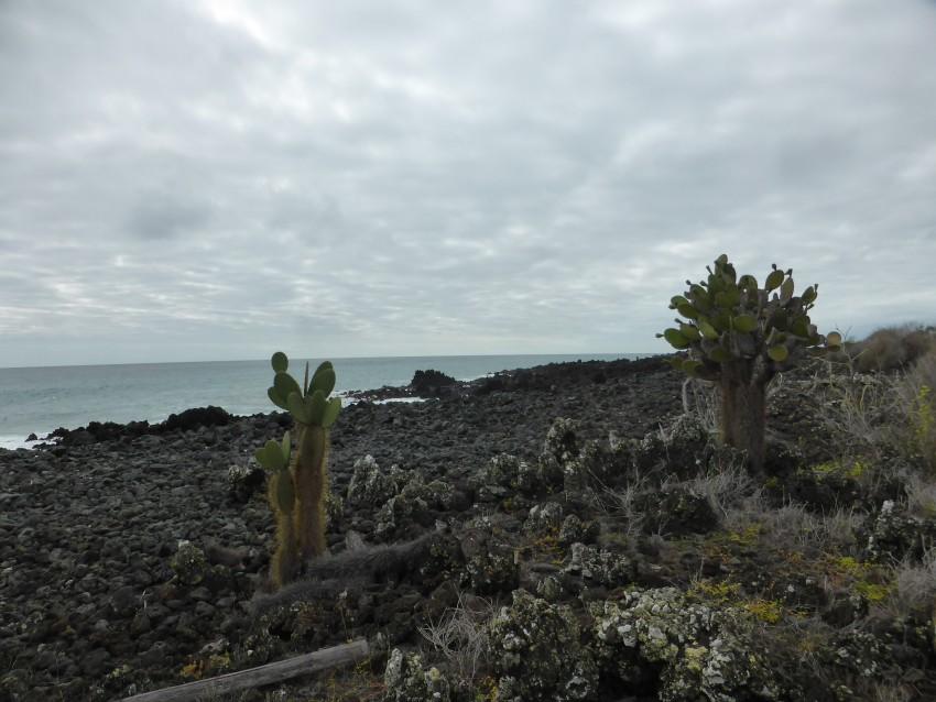 Isla Floreana, Galápagos Islands, Ecuador