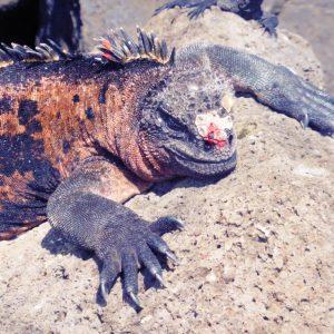 Galapagos: Isla Floreana Bahia Post Office Barrel