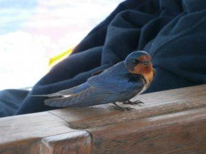 Little birdie buddy.
