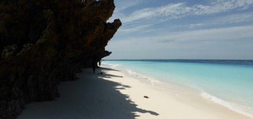 Nungwi Zanzibar: A Head of Exotic Follicles