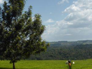 Nakuru: Juliette Meets Romeo