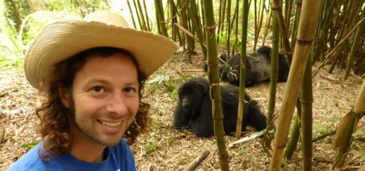 Meeting a wild silverback gorilla family