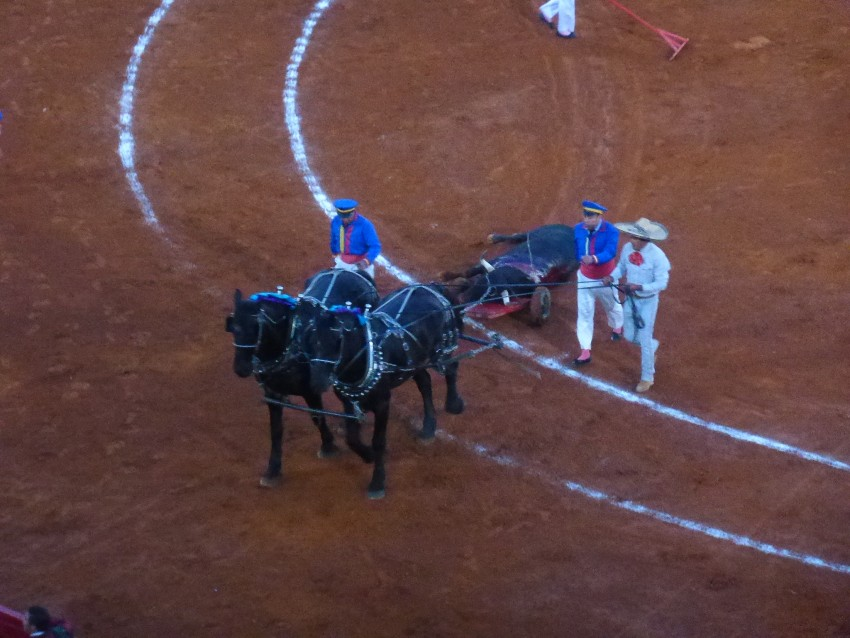 Mexican Bullfight in Mexico City