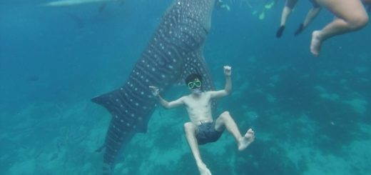 Swimming with Whale Sharks in the Philippines.